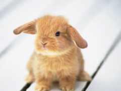 кролик, вышивки, bunny