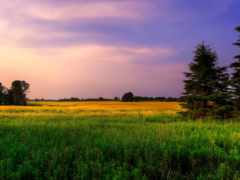 поле, природа, подборка