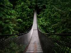 подвесной мост, растительность