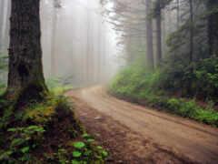 лес, дорогой, туман