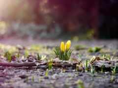 весна, ранняя, кб