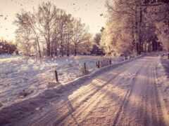 дорогой, лес, winter