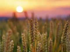 farmland, еда, американский