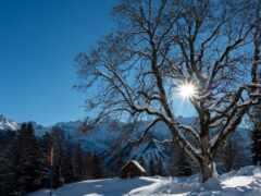 снег, свет, white