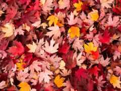 pinterest, осень, листва
