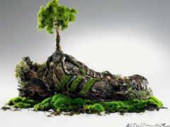 камнях, trees, растут