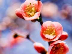 цветы, cvety, природа