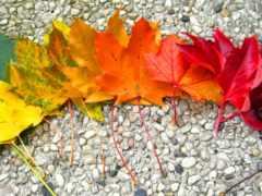 autumn, rainbow