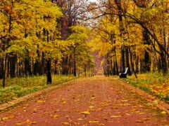 fore, осень, скамейка
