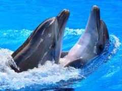 дельфины, water, блики