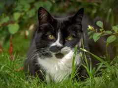 кот, трава, взгляд