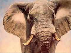 уши, большие, слона