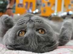 кот, cats, animals