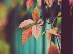 осень, листва, сухие