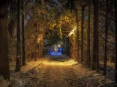 pantalla, bosques, bosque