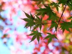 leaf, cool, устройство