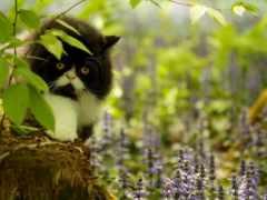 кот, чёрно, торент
