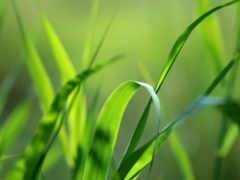 трава, макро, природа