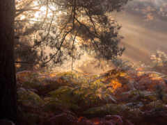 natural, landscape