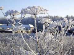 цветы, под, снегом Фон № 70140 разрешение 2560x1600