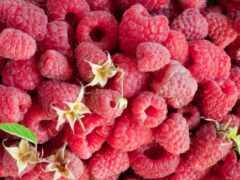малинка, summer, wineberry