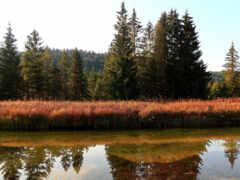 gratis, natural, landscape