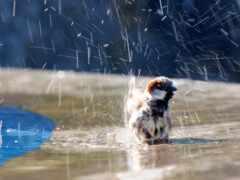 дождь, animal, птица