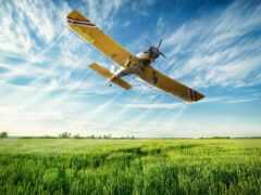 авиация, plane, weed