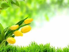 тюльпаны, цветы, желтые Фон № 37380 разрешение 2560x1600