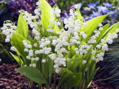 весна, cvety, смотреть