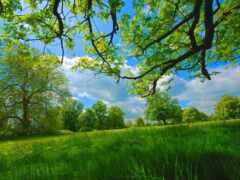 дерево, природа, фото