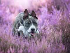 собака, animal, язык