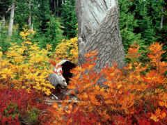 лес, осень, лесу Фон № 153631 разрешение 1920x1200