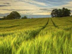 природа, поле, sweden