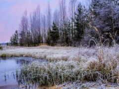 трава, winter, природа