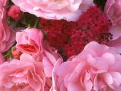 цветы, букет, красивый