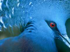голубь, птица, animal