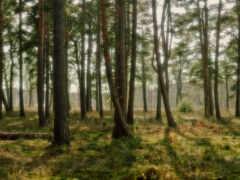 лес, дерево