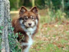 взгляд, собака Фон № 14740 разрешение 1920x1200