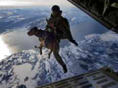 собаки, специального, назначения