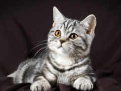 кошки, котят, киски
