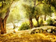 солнечный, природа, дерево