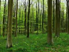 fore, дерево, природа