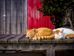 кот, dream, sny