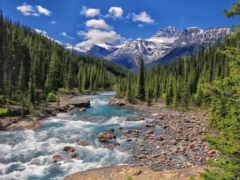 kanada, taiga, priroda