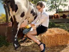 молоко, корова, seno