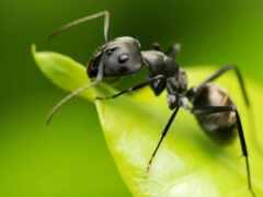 ant, зелёный, makryi