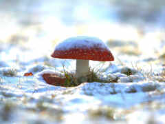 winter, mushroom, тема
