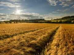 природа, landscape, поле