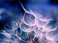 цветы, air, картинка
